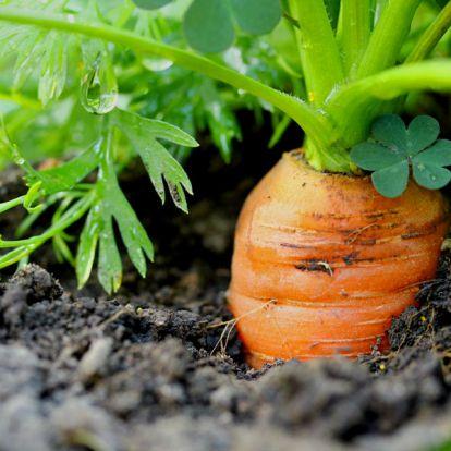 A legfontosabb növényi tápanyagok: mindet ismered?
