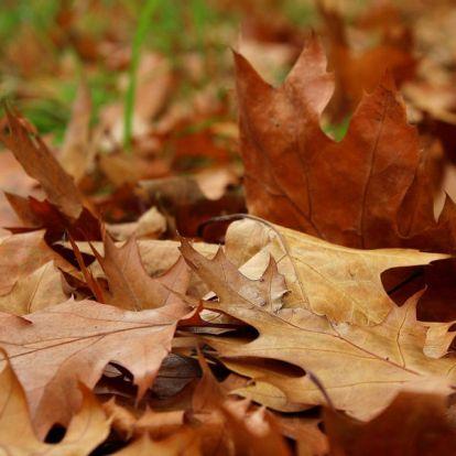 Száraz levelek, ne égjetek