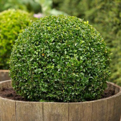 9 csodaszép téli növény