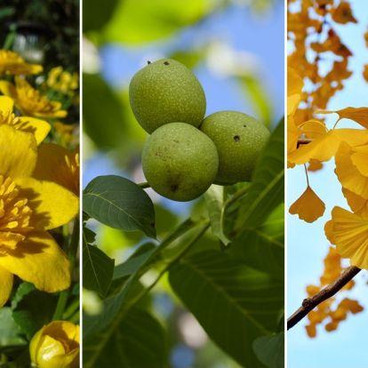 Nyertesek és vesztesek: mely kerti növények örülnek a klímaváltozásnak?