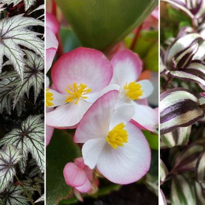 Zöldövezet a lakásban: 5 tipp az impozáns növénysarokért