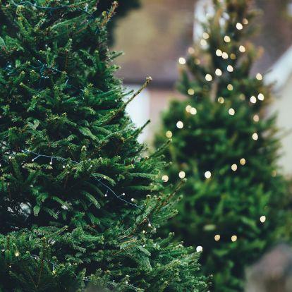 Milyen növényekkel ünnepelhetjük a karácsonyt?