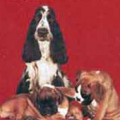 A legszebb kutyatörténetek
