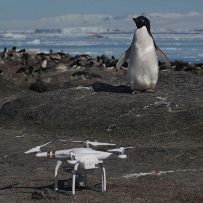 A klímaváltozás vethet véget a hatalmas antarktiszi pingvinkolónia 2800 éves nyugalmának