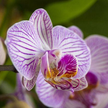 Orchideatulajdonosok segítségét kérik most a kutatók!