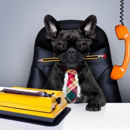 Milyen személyiség a főnököd?