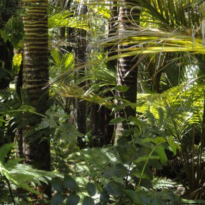 Ellentmondásos helyzet pörgeti az amazonasi esőerdők pusztítását