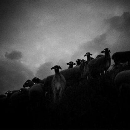 A birkák éjszaka félelmetesek