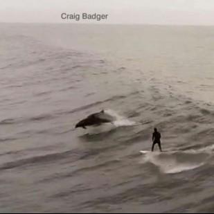 Delfinekkel szörföző embert videózott le egy drón Kaliforniában