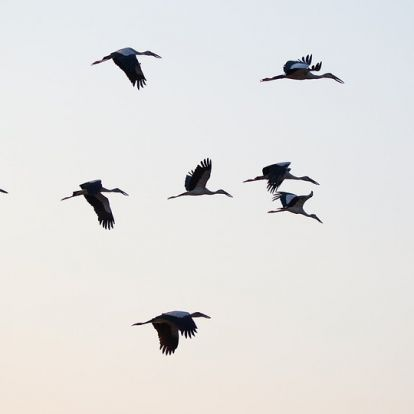 Így zavar be a madaraknak a klímaváltozás