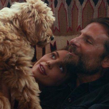 Bradley Cooper kutyája díjat nyert a Csillag születikért – azóta felvág