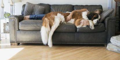 10 nagy méretű kutyafajta, akiket egyszerűen nem lehet nem imádni