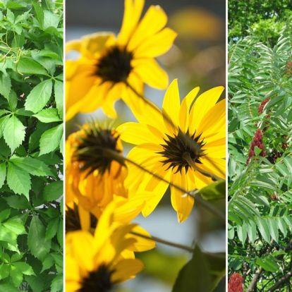 7 növény, amely ragaszkodik a kertben az örök élethez