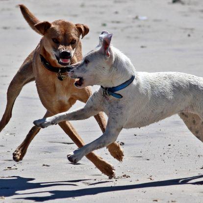 6 dolog a civilizált kutyatartásért