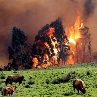 Eljött az idő, hogy pánikba essünk az éghajlatváltozás miatt