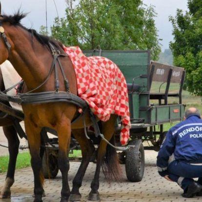 Kevesen tudják, hogyan kell viselkedni, ha lovaskocsival találkoznak