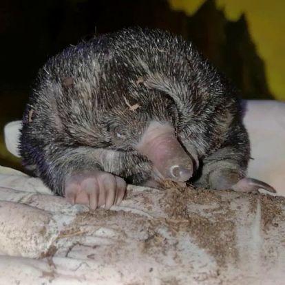 """""""Sün"""" kelt ki a tojásból – különleges állat cseperedik a Fővárosi Állatkertben"""