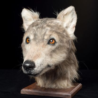 Rekonstruálták, hogy nézhetett ki egy kutya 4000 éve