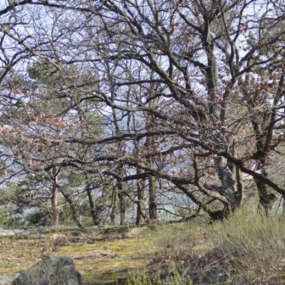 Papsapka-kövek. Elszórt óriás kőlepények a Balaton-felvidéken