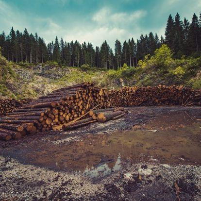 Dőlnek a fák a Dunakanyarban