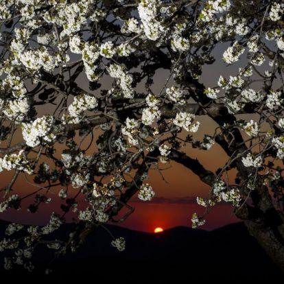 Áprilisi virágeső | National Geographic