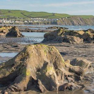 Ókori erdő bukkant elő a tengerből Wales partjainál