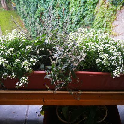 Nemcsak a kertet, az erkélyt is sújtja – helló, kártevők!