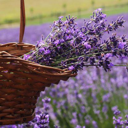 Provence itthon