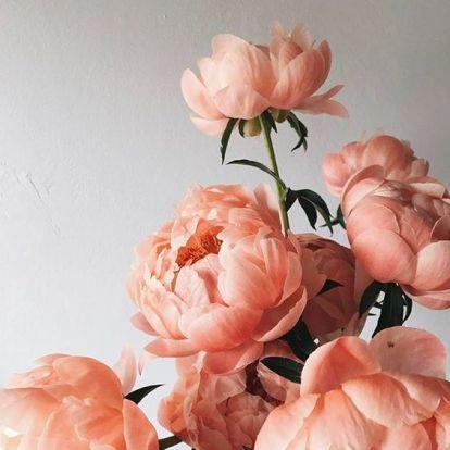 2019 virágtrendjei nyárra – Így dobd fel az otthonod!