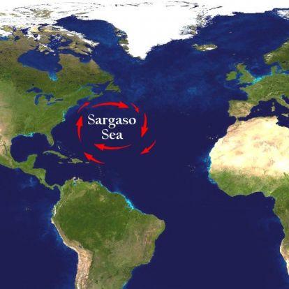 Erdőirtás, műtrágya: az emberi tevékenység táplálja az Atlanti-óceánt ellepő gigantikus algamezőt