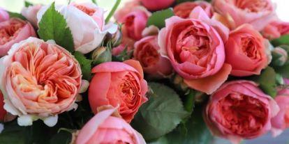 Tippek, hogyan maradhat sokáig friss a vágott virág