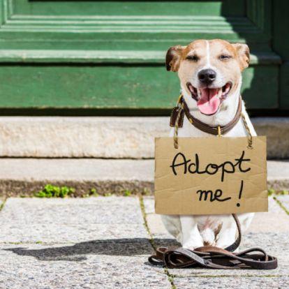 100 ezer kóbor kutya országa vagyunk