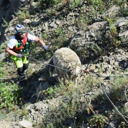 Szikláról mentettek bárányt a hős tűzoltók