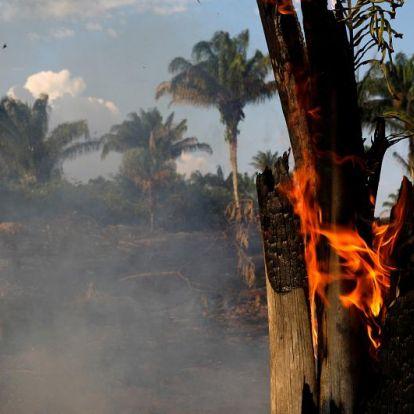 5 dolog, amit te is megtehetsz a lángoló Amazonasért