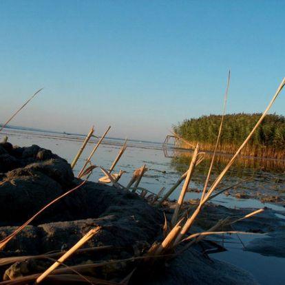 Megállt az algák szaporodása a Balatonban