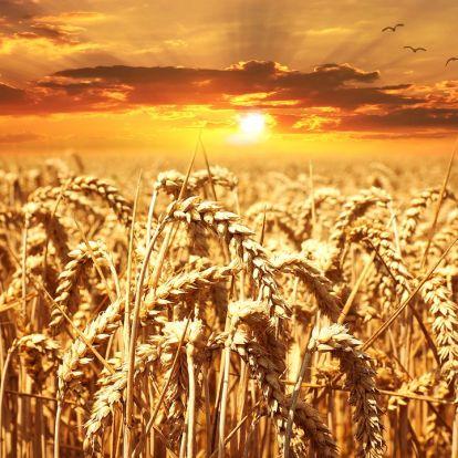 Egyszámjegyűre mérséklődött a mezőgazdasági termelői árak növekedési üteme