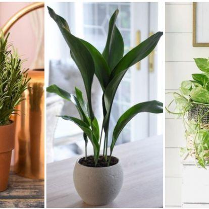 5 növény, ami imádja a konyhát, és gyönyörűek is