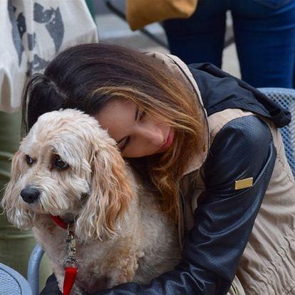 Állati jövedelmező terápia Angliában