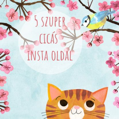 5 cicás Instagram oldal macskabolondoknak