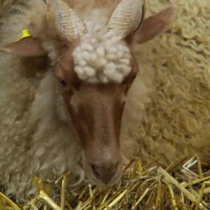 Soroló: Állattenyésztők az OMÉK-on