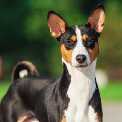 A kezdetektől az ember mellett vannak - a világ legrégibb kutyafajtái