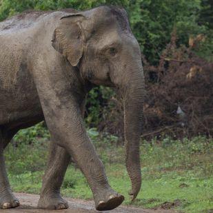 Zoo mag társkereső