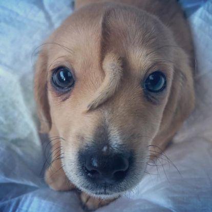 Farok nőtt egy kutya fejére