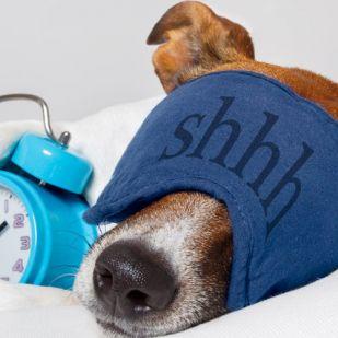 Nincs jobb ébresztőóra egy kutyánál