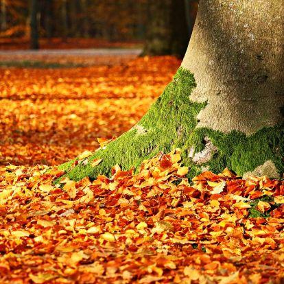 1901 óta az idei ősz volt a legmelegebb