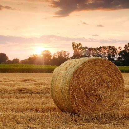 Az agrárpolitika jövőjéről tárgyaltak a közép-kelet-európai agrárszervezetek