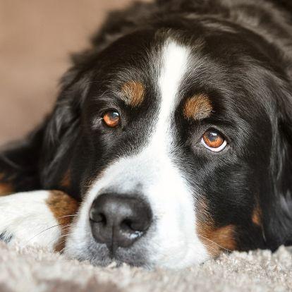 Egy spirituális lecke, amelyet a kutyánk taníthat meg nekünk