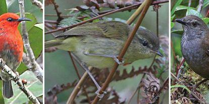10 új madárfaj került elő az indonéz szigetvilágból