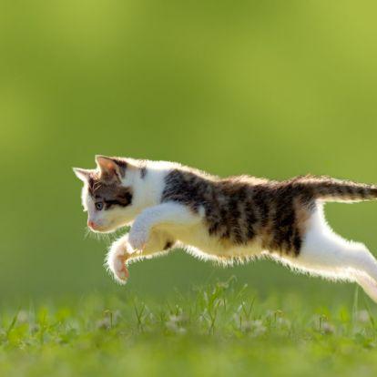 A gyilkos macska: önként, kéjjel öl