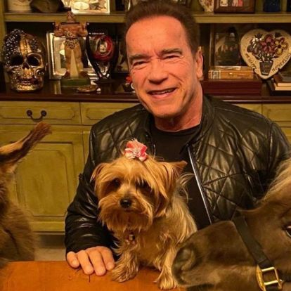 Schwarzenegger háziállatos fotóját három emojival díjazta Vajna Tímea